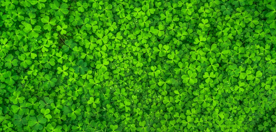 St. Patrick's Day Flash Fiction